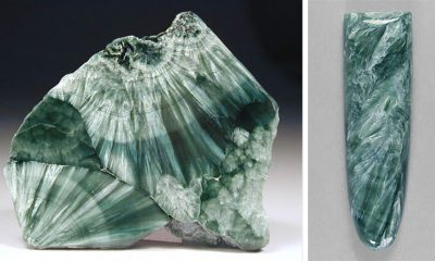 This Lovely Green Gem Has a Feather-Like Appearance