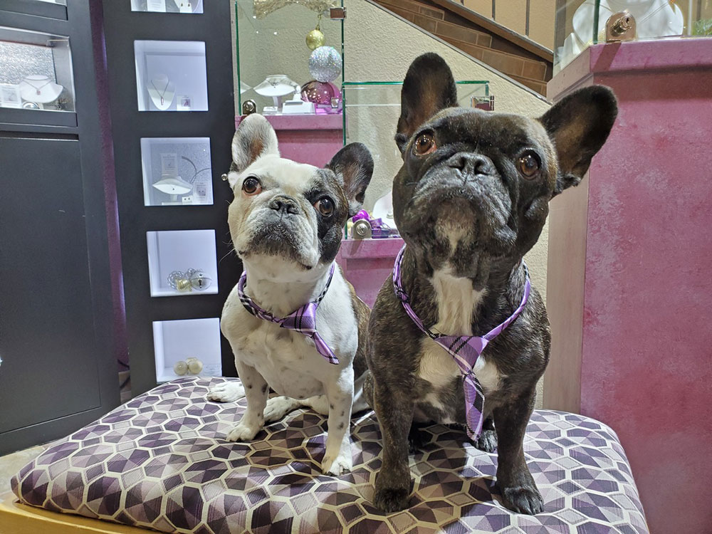 French Bulldogs Star in Arizona Store's Promotions … and More of the Cutest Jewelry Store Mascots