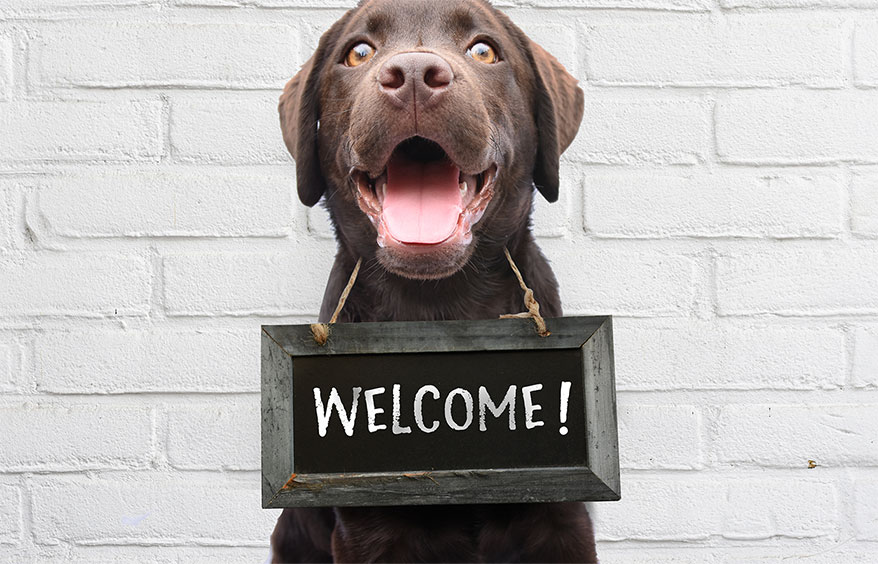 Do You Welcome Pets Into Your Store? Our Brain Squad Sounds Off