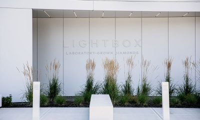 Lightbox Lab-Grown Diamond Plant