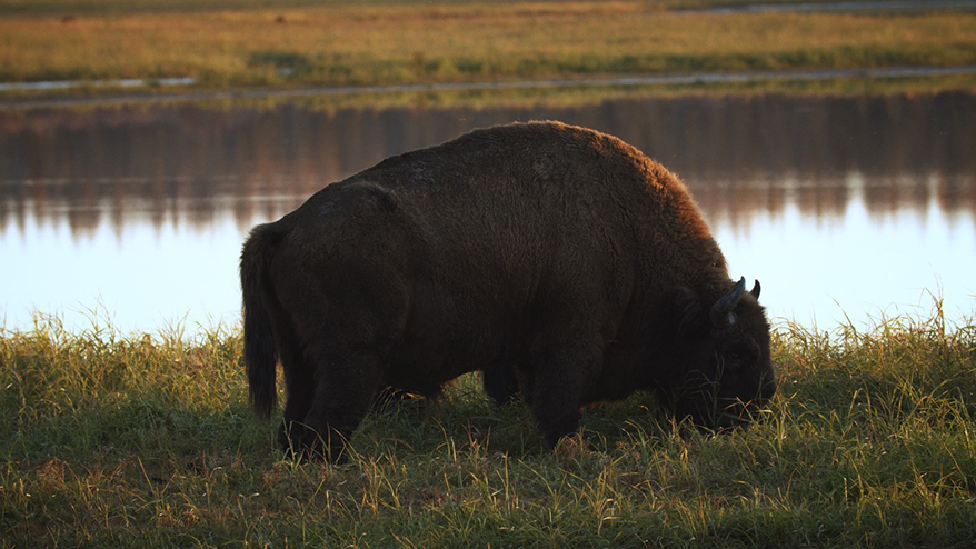 ALROSA Has Become the Official Partner of Pleistocene Park